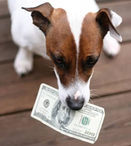 dog-money.jpg