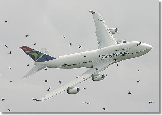 항공기와 새.. 위험천만
