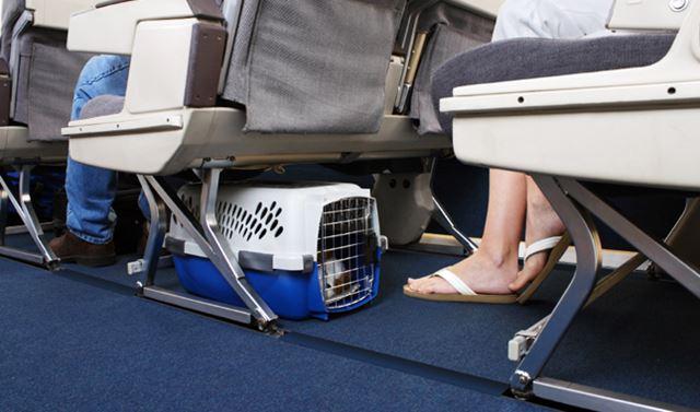 pet_airplane.jpg