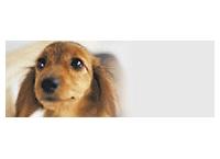 전일공수(ANA) 애완동물 운송 기준