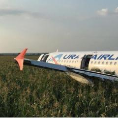 러시아 항공기, 이륙 도중 새와 충돌해 옥수수 밭 동체착륙