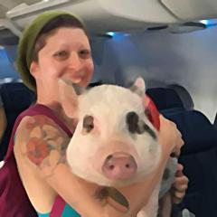 델타항공, 장거리 항공편 반려동물 탑승 금지