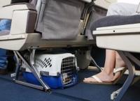 아시아나항공, 반려동물 기내 반입 무게 확대