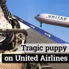 유나이티드, 이번엔 반려동물 잘못 실어 비행하다 회항